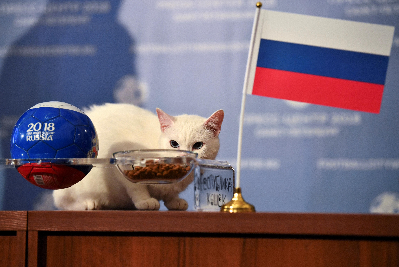 Coupe du monde 2018: Achille le chat prévoit une victoire de la Russie contre l'Arabie