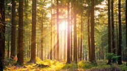 The UK Now Has A Government Appointed Tree Champion: What Exactly Does That