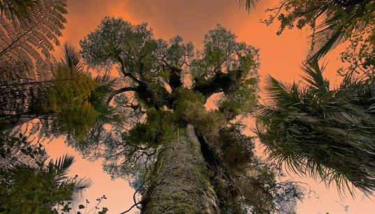From Africa's Baobabs To America's Pines: Our Ancient Trees Are