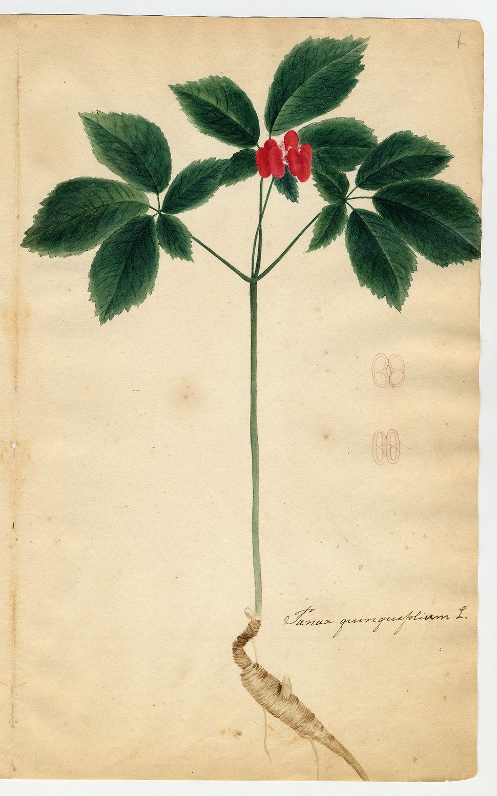"""""""Herbarium parvum, pictum"""" (1817–1821) by Orra White Hitchcock."""