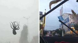 Ekel-Wetter: In China regnet es plötzlich Oktopusse und Krabben vom