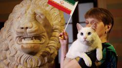Achille le chat avait prédit la victoire de l'Iran