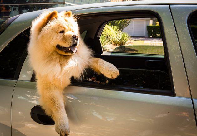 여행 좋아하는 사람이 SUV를 타고 할 수 있는 여행방법