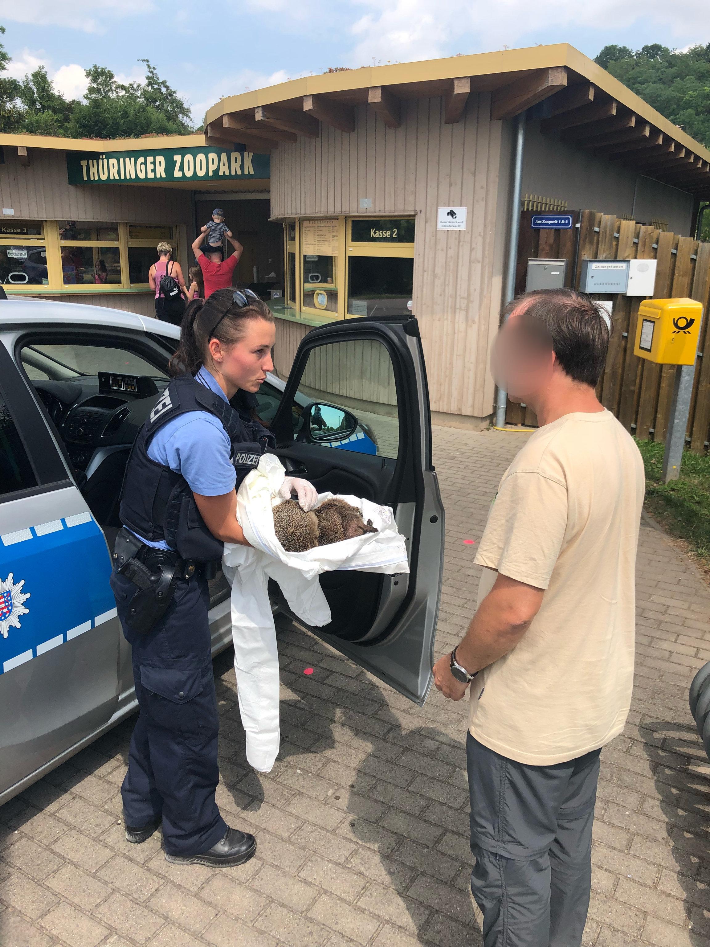 Sie naschten Eierlikör: Erfurter Polizei muss betrunkene Igel