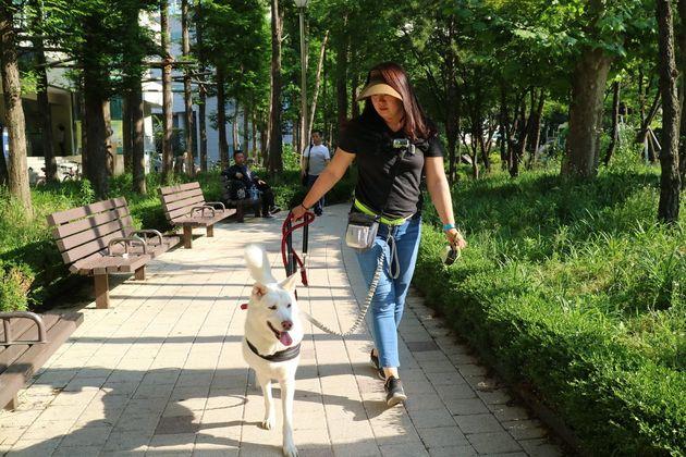 지난 1일 서울 동대문구 신설동의 한 공원에서 풍산개 복순이가 펫시터 최문희씨와 함께 산책을 하고