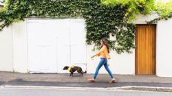 Όσοι έχουν σκύλο στη Γένοβα θα πρέπει στο εξής να έχουν και νερό μαζί τους όταν τον βγάζουν βόλτα και ο λόγος είναι πολύ