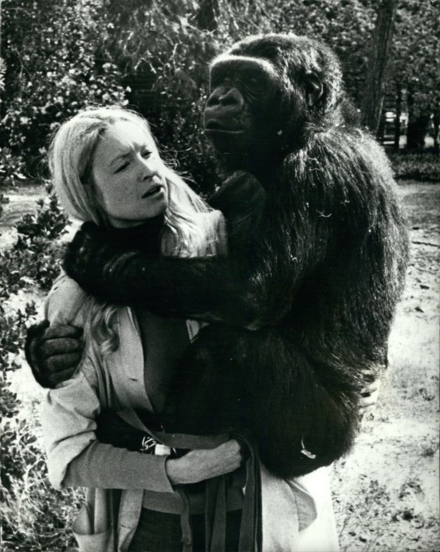 Koko with Dr Penny Patterson in