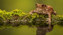 How To Make Your Garden Toad And