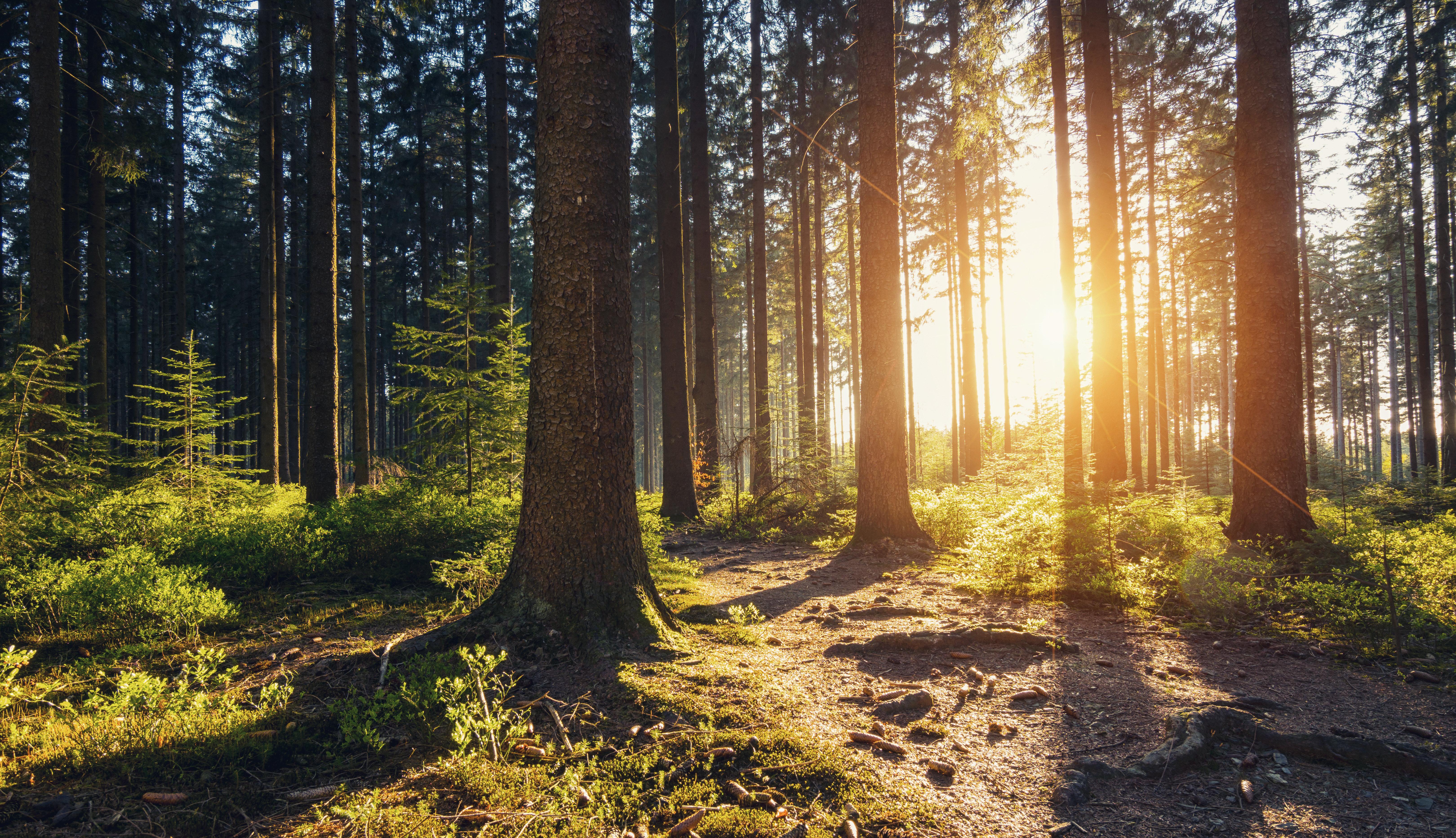 Der deutsche Wald stirbt – ein Projekt aus Münster will das ändern