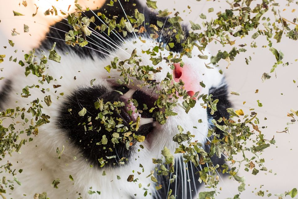 Let Photos Of Cats High On Catnip Be A Light In This Dark, Dark