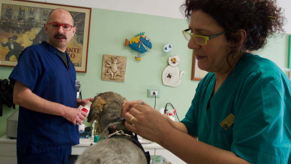 οι γιατροί φροντίζουν το hot spot του Ντάφι