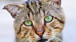 Sommerzeit ist Urlaubszeit: Katzenschutzpass sorgt für bestmögliche