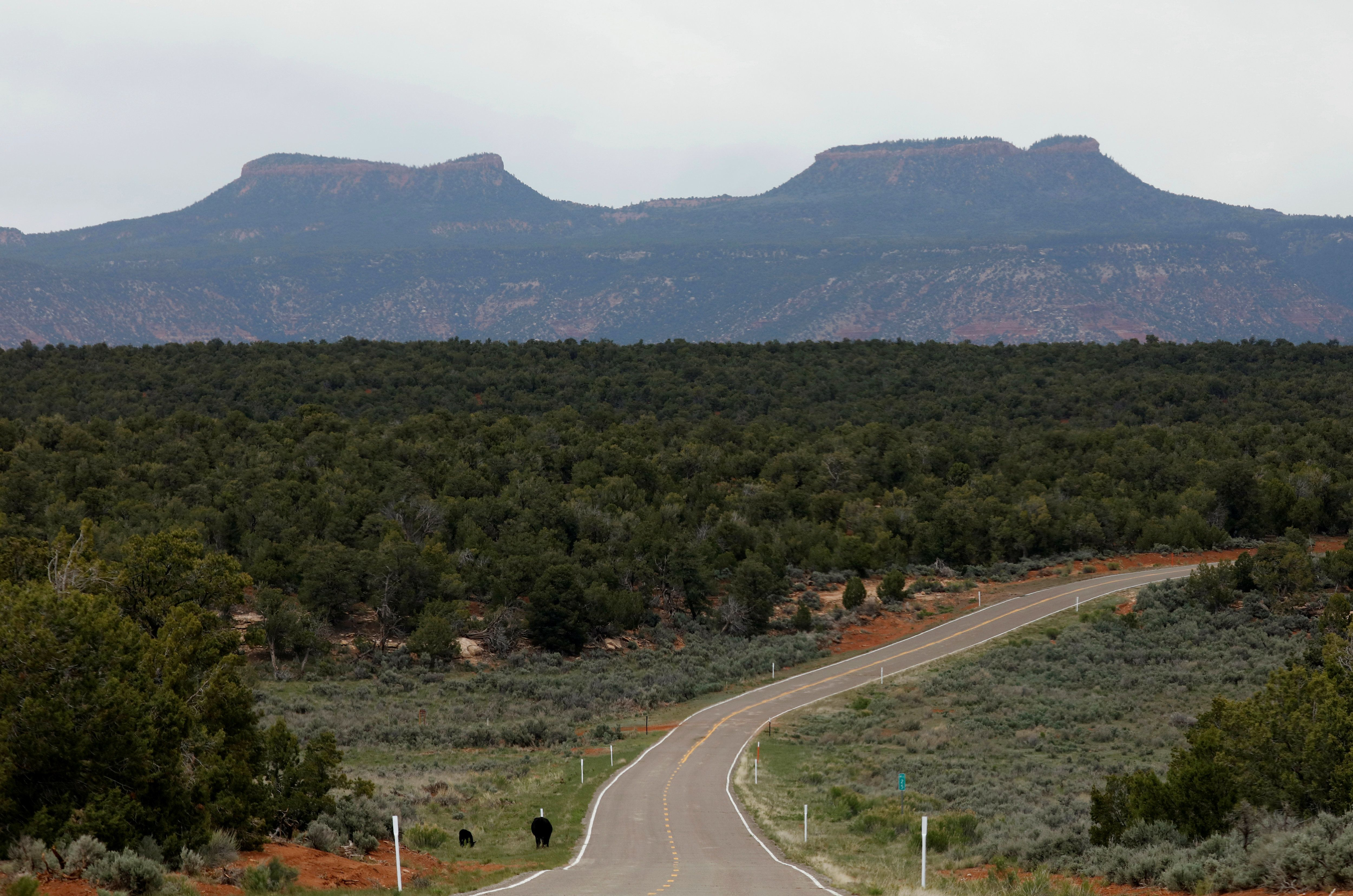 Bears Ears, the twin rock formation that's part of Bears Ears National Monument in the Four Corners region. The monument lost