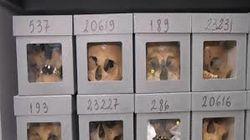 Une commission algérienne pour reconnaître les crânes d'Algériens conservés en