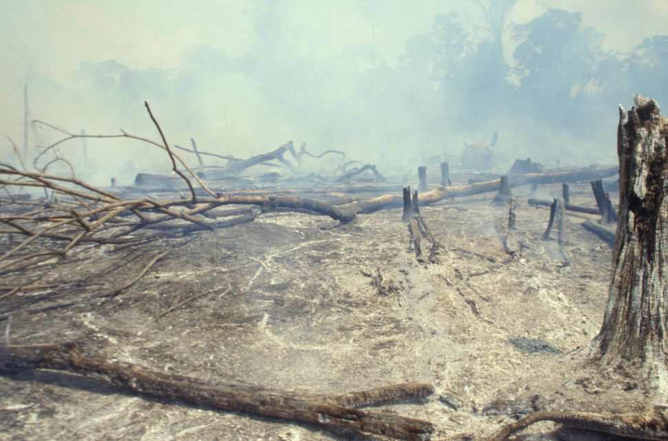 Amazon rainforest burning to clear it for cattle-raising in Acre State, Brazil.