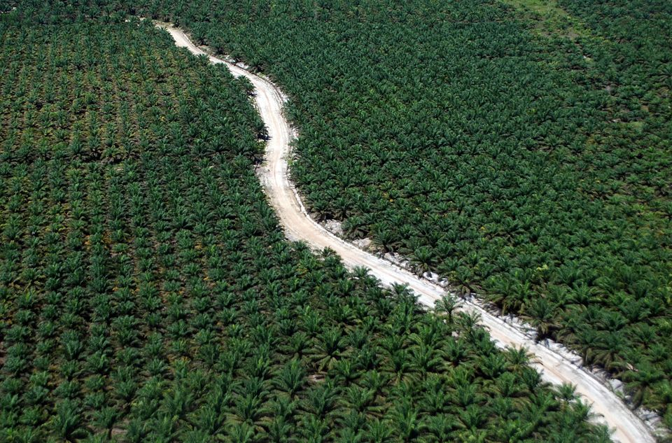 A road running through a palm plantation in Riau, Sumatra Island,