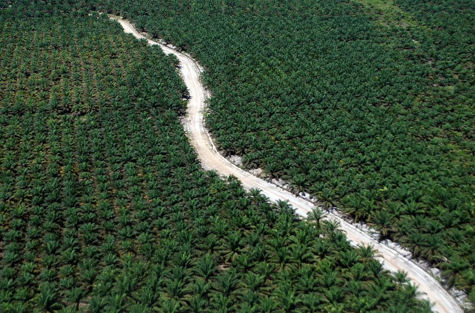 A road running through a palm plantation in Riau, Sumatra Island, Indonesia.