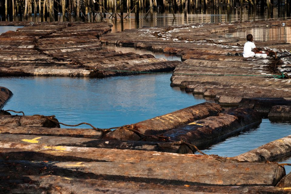 Logs floating in the water near Tumaco, Colombia. Sawmills on the banks of the Pacific jungle rivers produce...