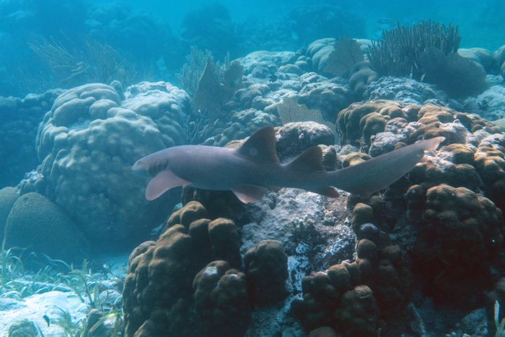 The Belize Barrier Reef System is home to nearly 1,400 species, including several endangered animals.