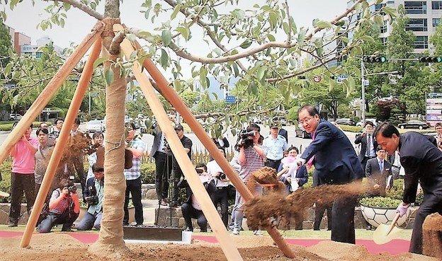 말라죽은 '홍준표 나무'가 25개월 만에