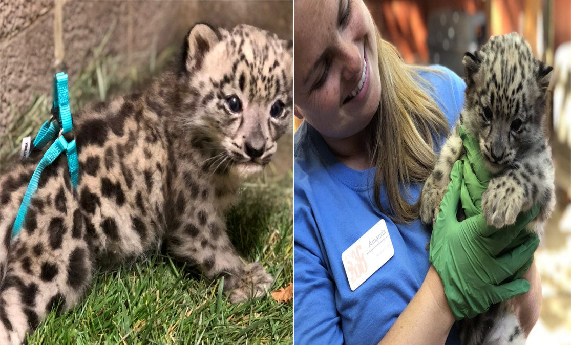 5 Cute Animal Pictures To End The Week: From Grumpy Heatwave Pets To A Snow Leopard Learning To