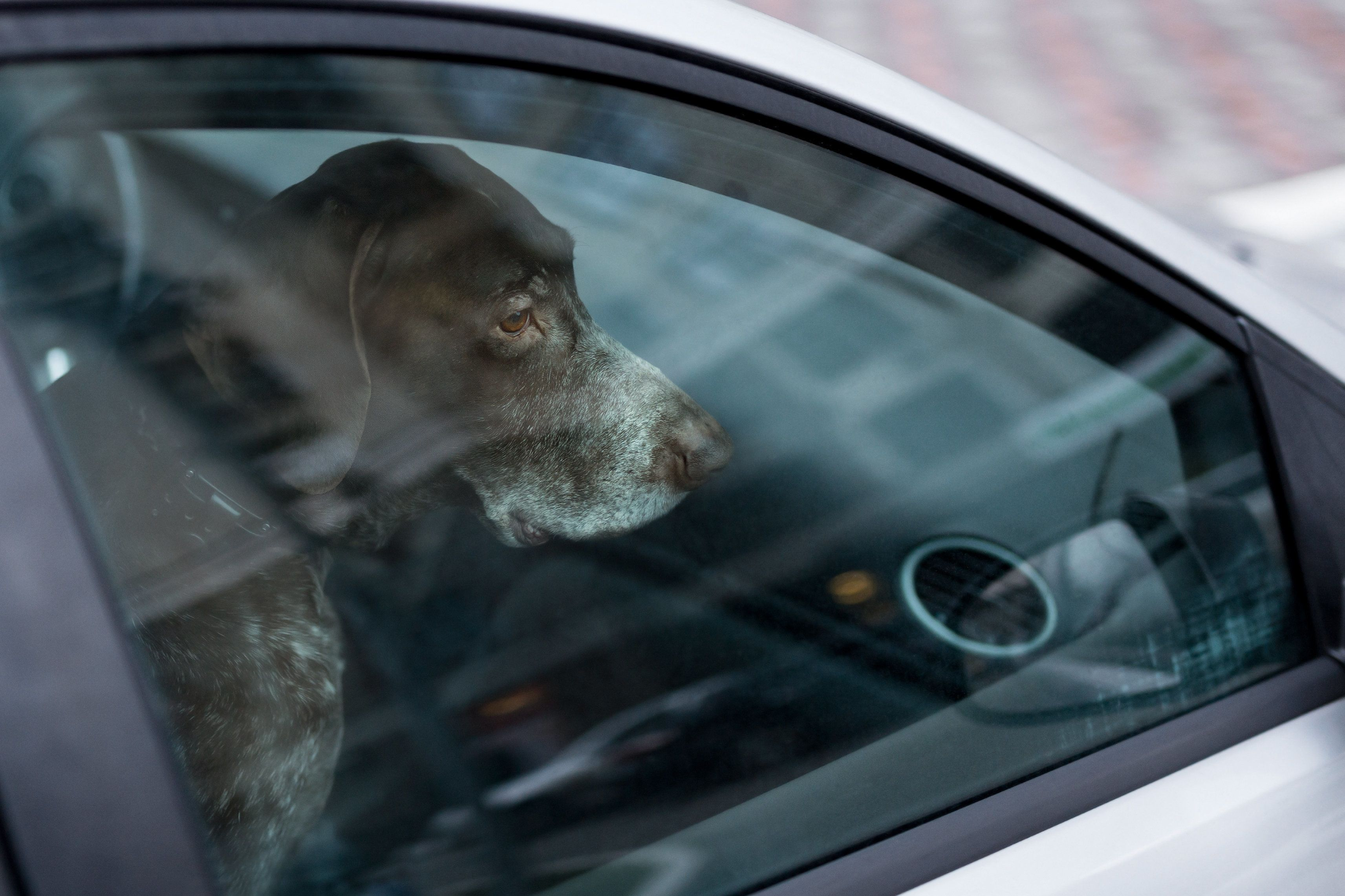 If You See A Dog Locked In A Car On A Hot Day, Do This