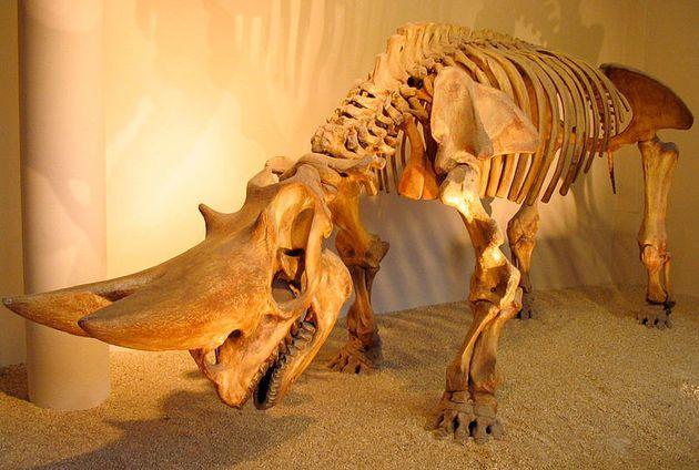 Reconstitution du squelette complet d'un