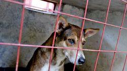 Verwahrlost: Polizei rettet Hund aus vermülltem Wohnwagen