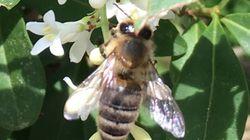 #Beedabei: Warum sich ein Künstler für Bienenrechte