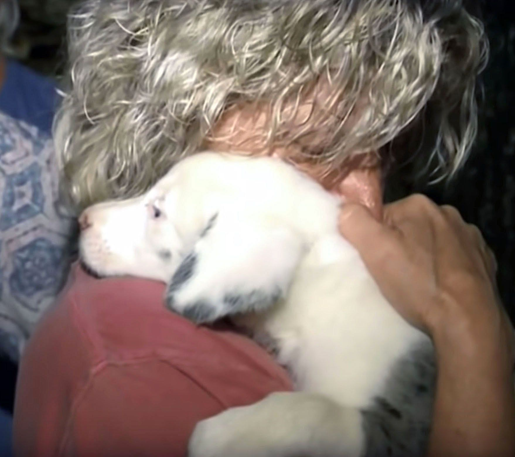 A deaf puppy was rescued from a 50-foot hole in Huntsville Alabama