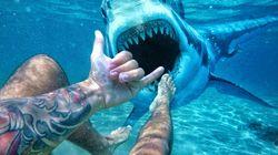 Τουρίστρια πάει να ταϊσει καρχαρία (ναι καλά διαβάσατε) και εκείνος την αρπάζει από το δάχτυλο και την