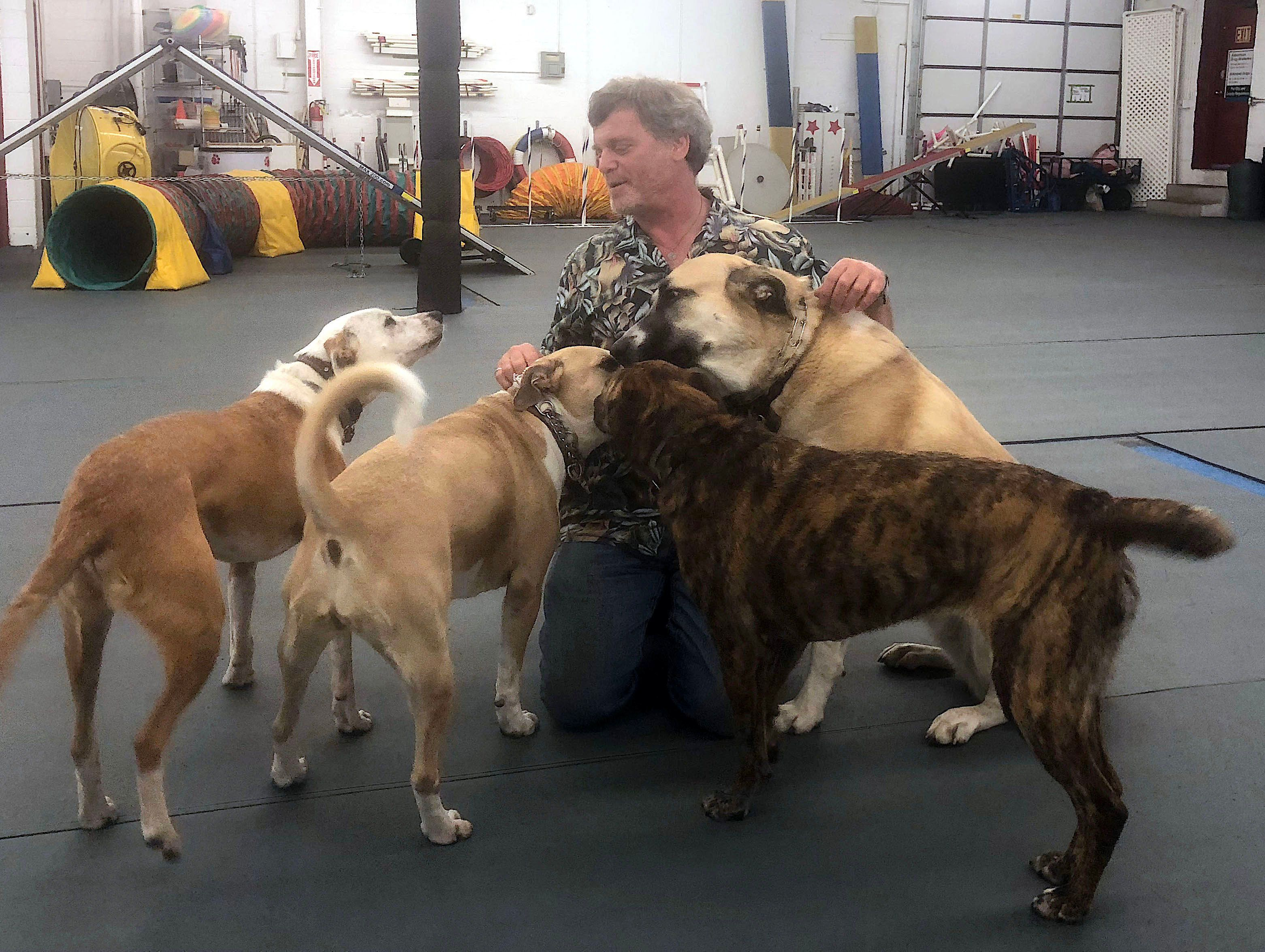 Animal behaviorist Corey Cohen says dogs can be traumatized by the sound of fireworks.