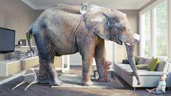 코끼리를 반려동물로 기를까 고민하는 이들을 위한
