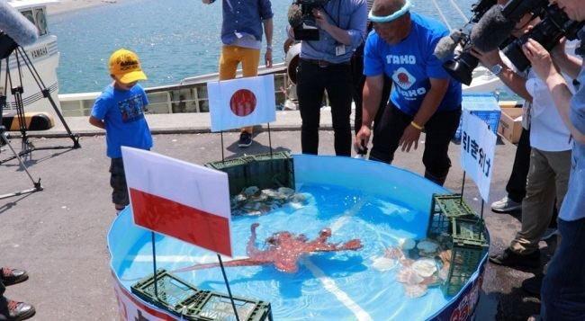 일본의 월드컵 결과를 예측하던 문어가 16강전 전에 수산시장에