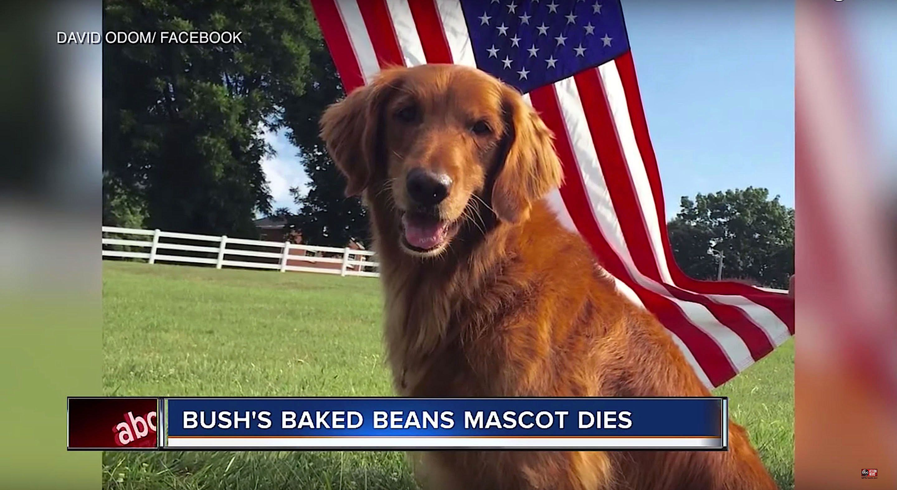 Sam one of the dogs that played Duke in Bushs Baked Beans commercials has died