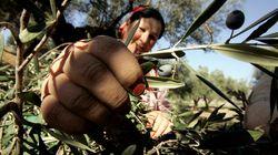 Des producteurs d'huile d'olive récompensés à
