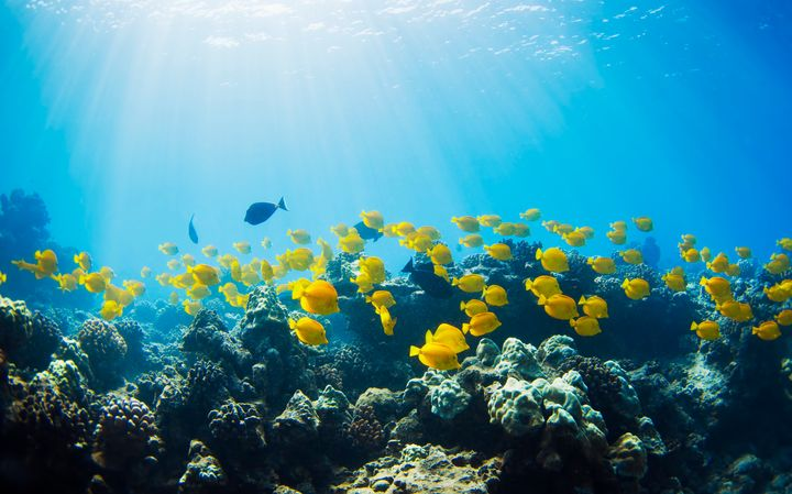 Beginning in 2021, Hawaii will prohibit the sale and distribution of unprescribed sunscreens that contain oxybenzone and octinoxate, which can kill coral larvae.