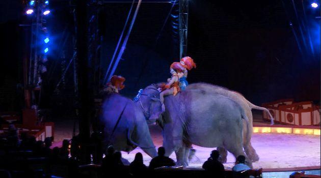 Circus Krone: Elefant stürzt mitten in der Vorstellung ins