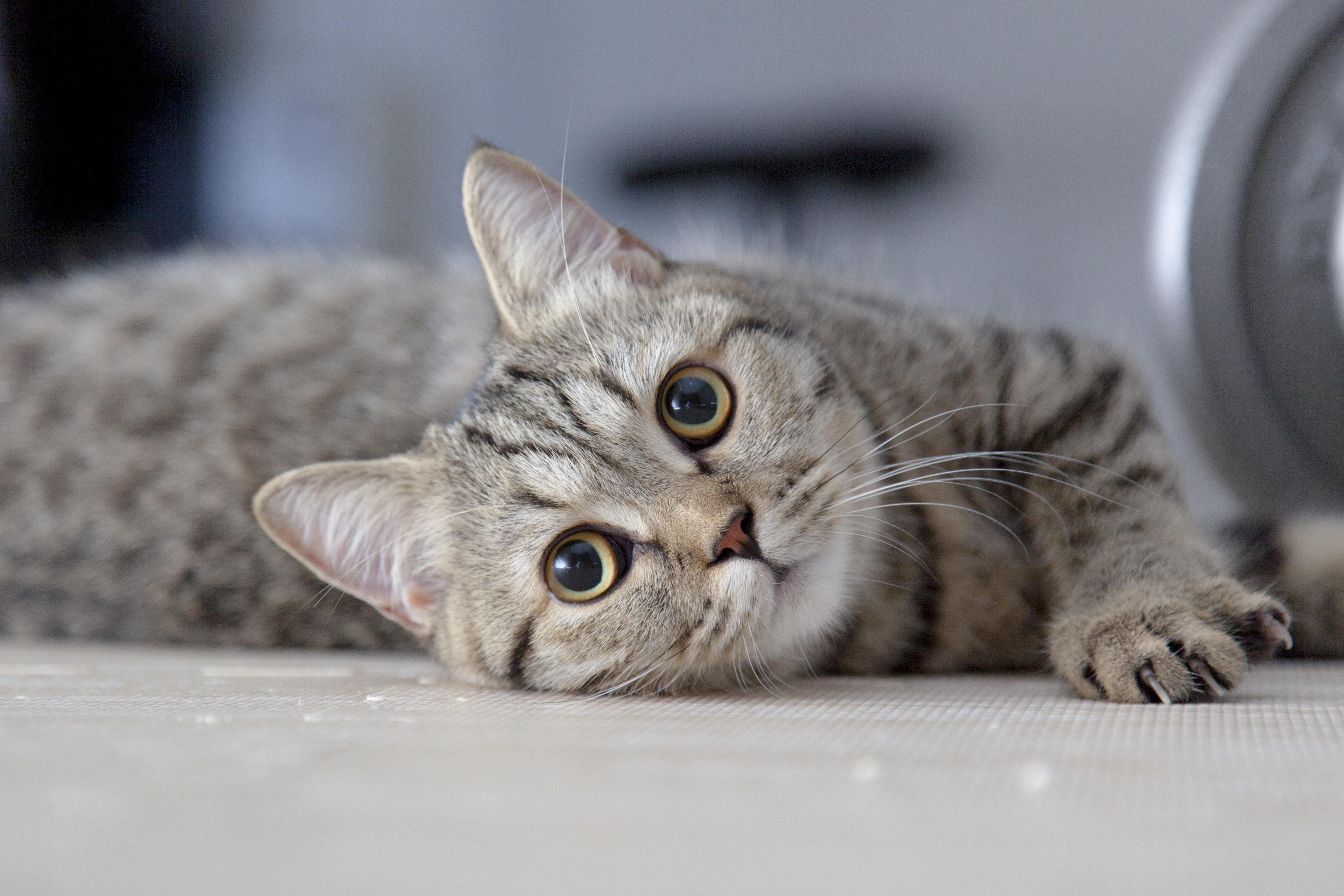 고양이는 요즘 엄청난 격동의 시간을 통과하고