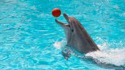 Delfinhaltung: Ist das