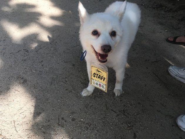 동물축제 반대축제에서는 동물체험에 동원되는 동물은 없었지만 스태프로 참여한 개는 있었다.