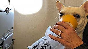 A JetBlue crew provided oxygen for a dog that was having trouble breathing