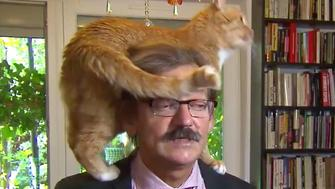 Cat on a head