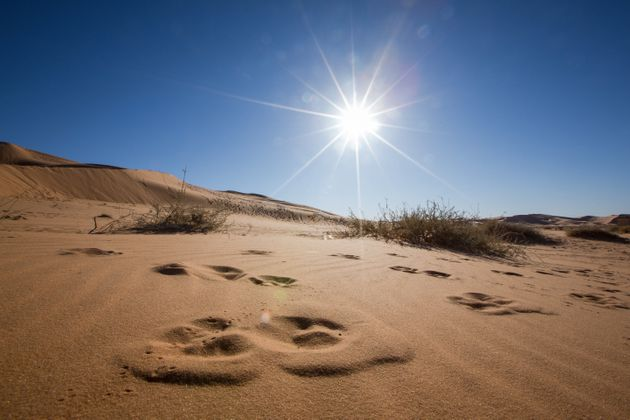 La température atteint un pic record de 65 degrés à