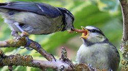 전 세계의 새들이 1년간 잡아먹는 곤충의 양이