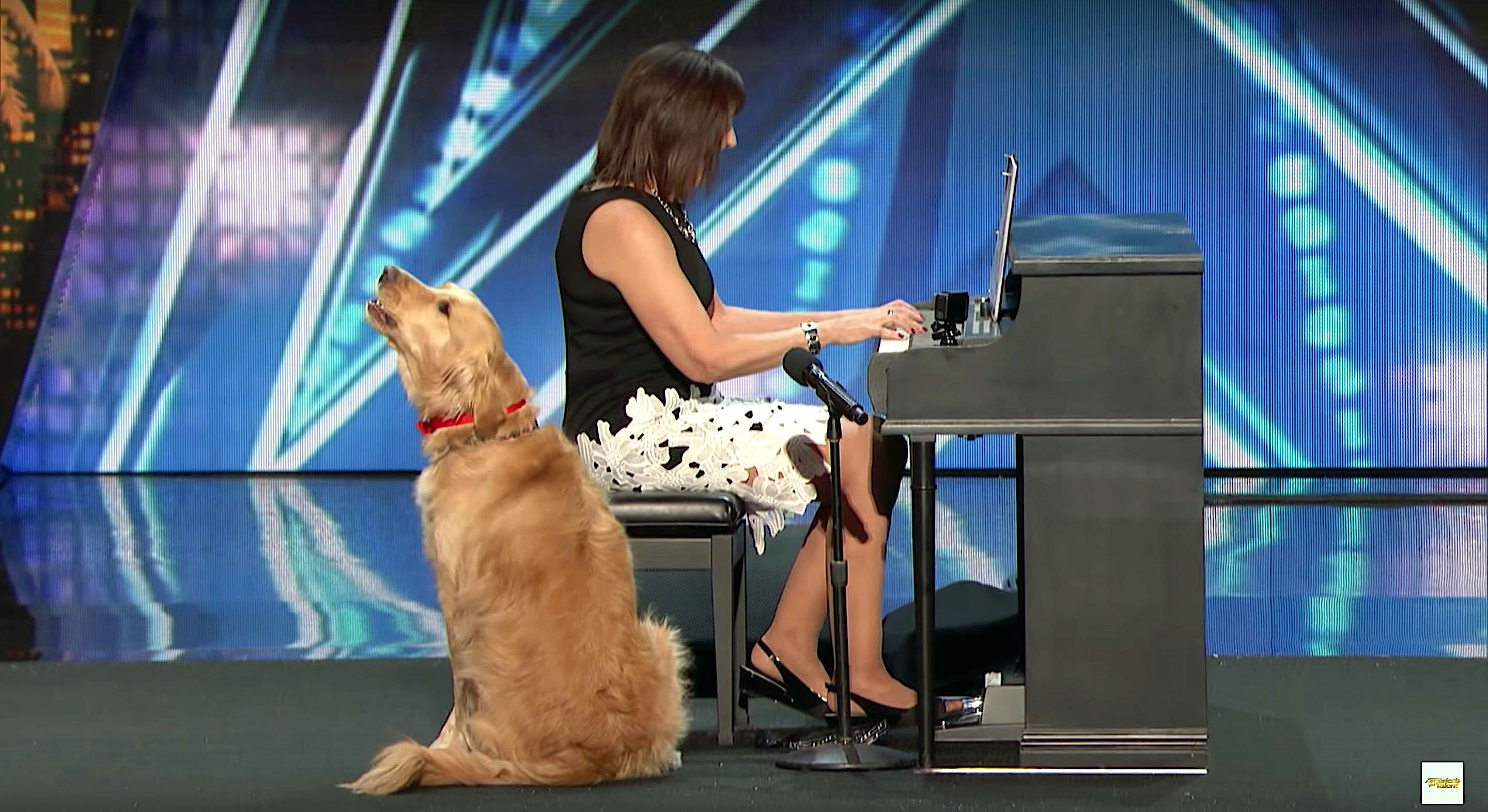 Oscar the singing dog performing on Americas Got Talent