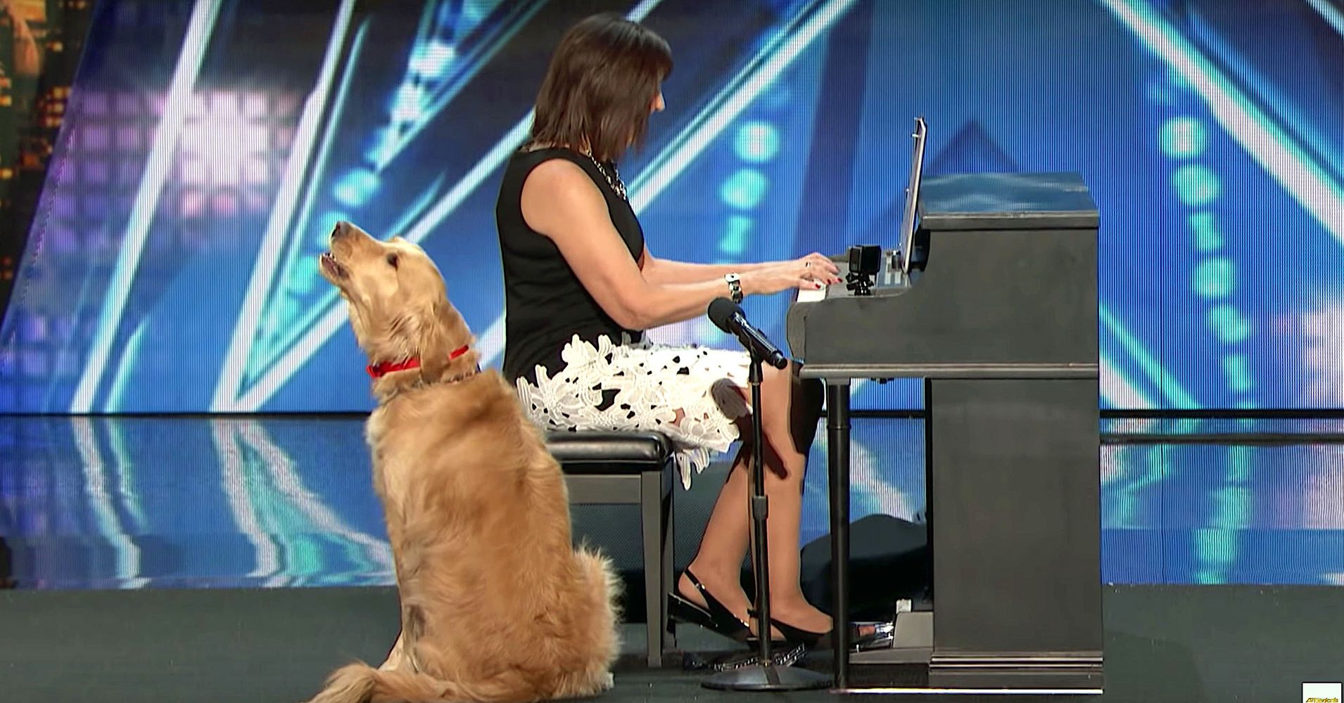 Singing Dog Wows Simon Cowell On 'America's Got Talent'