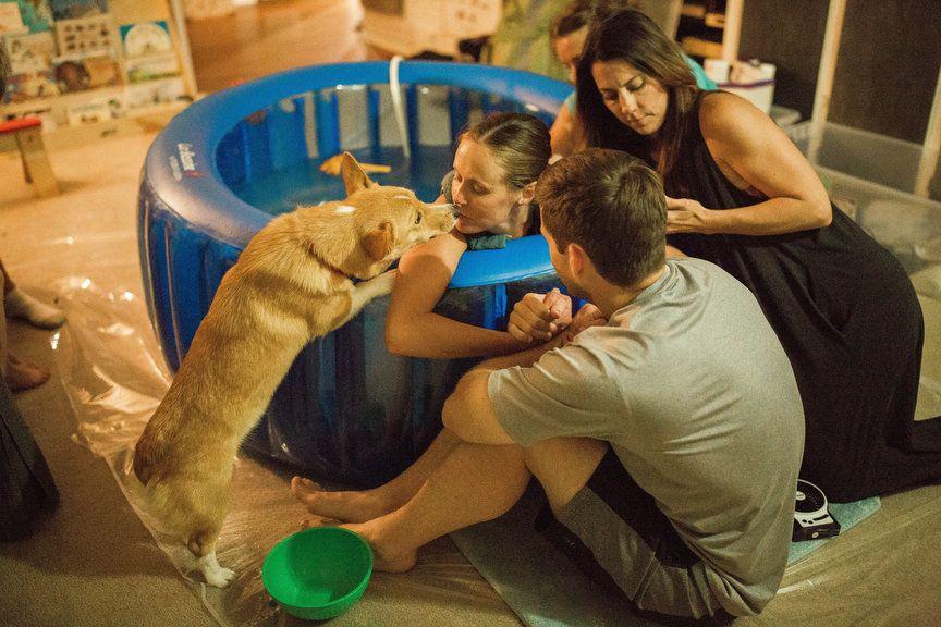 Dieser Hund hat sein Frauchen liebevoll durch ihre Hausgeburt