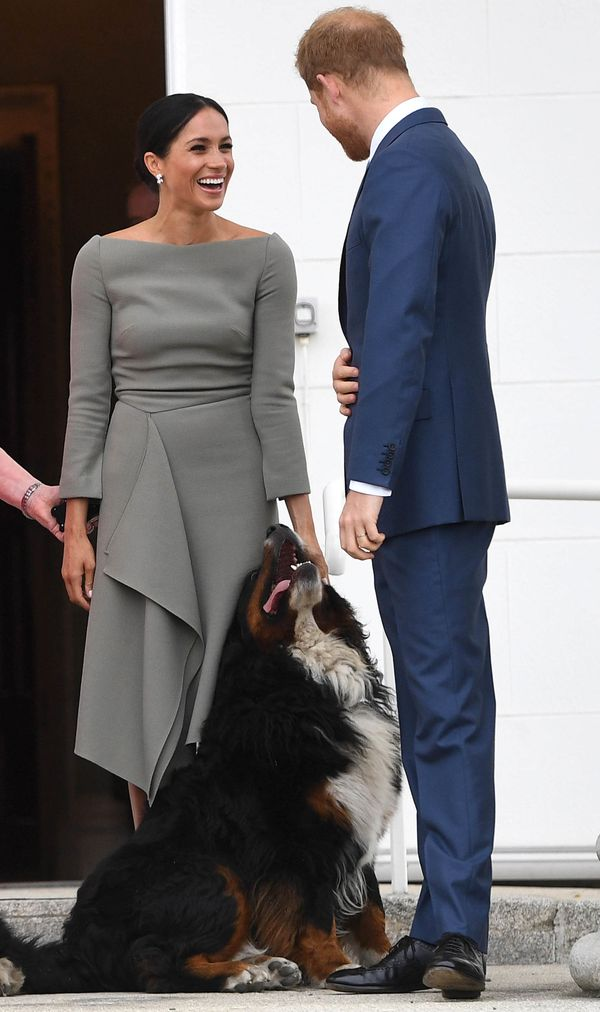 Harry and Meghan meet one of Irish President Michael Higgins and wife Sabina Coyne's dogs during a visit to Dublin.
