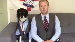 5 Cute Animals To End The Week: A Dog Channels Gareth Southgate And Many, Many